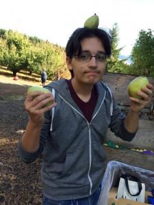 5-pears-560x747